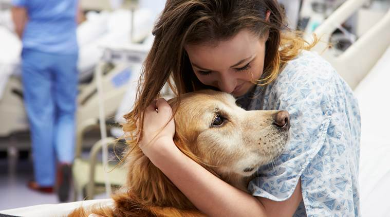 Therapy dogs can help docs and nurses to manage stress: Study